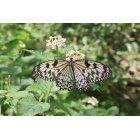 나비 21