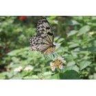 나비 22