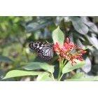 나비 23