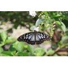 나비 24