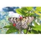 나비 27