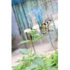 나비 47