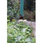나비 49