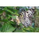 나비 46