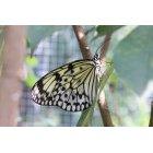 나비 40