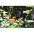나비 42