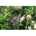나비 38