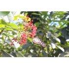 나비 36