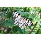 나비 57