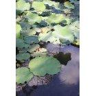 연못 10