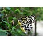 나비 67