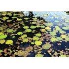 연못 12