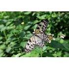 나비 63