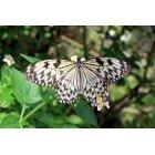 나비 64