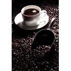 커피 305