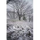 겨울풍경 3