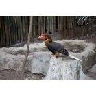 큰부리새 8