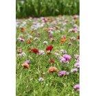 꽃 654