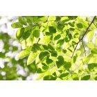 나뭇잎 342