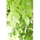 나뭇잎 341