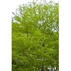 나뭇잎 336