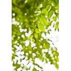 나뭇잎 335