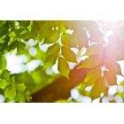 나뭇잎 332