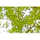 나뭇잎 329
