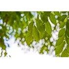 나뭇잎 325