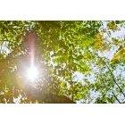 나뭇잎 323