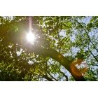 나뭇잎 322