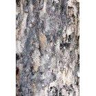 나무 658