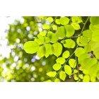 나뭇잎 319