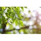 나뭇잎 316