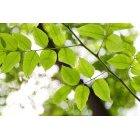 나뭇잎 313