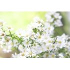 꽃 782