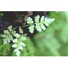 나뭇잎 423
