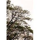 나무 670