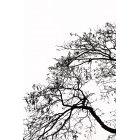 나무 669