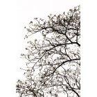 나무 668