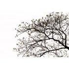 나무 667