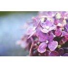 꽃 1187