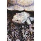 거북이 24