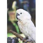 앵무새 47