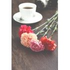 꽃 1341