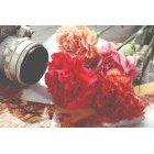 꽃 1336