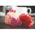 꽃 1422