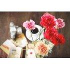 꽃 1415