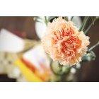 꽃 1413
