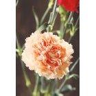 꽃 1411